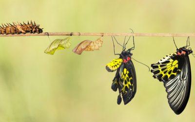 3 idées pour : être le super manager de la transformation !